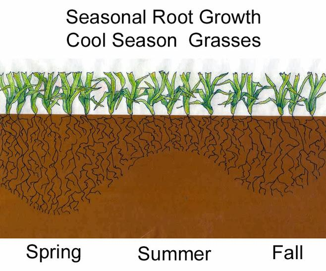 Growing period Cool Season Grasses